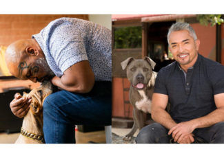 Mike Tyson, Cesar Millan training to enter CBD pet market – Pet Food Processing