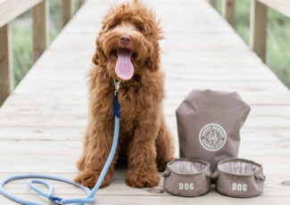 Pawsitively Fetching – Gifts & Decorative Accessories