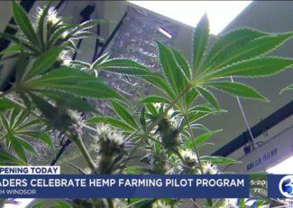 State leaders to celebrate hemp-growing program – WFSB