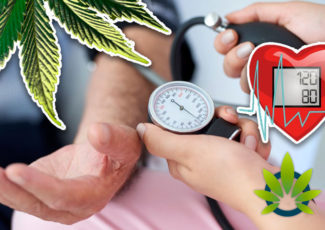 The Healthy Impact of Medical Marijuana on Reducing Hypertension Symptoms – TimesOfCBD