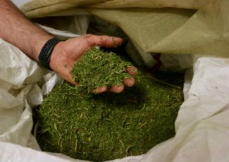 The 'hemp gold rush': A look at the Routt County businesses leading the charge – Steamboat Pilot & Today