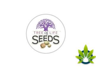 Tree of Life Seeds: Full-Spectrum CBD Oil Chocolate Bars Edibles and Soft Gels – TimesOfCBD