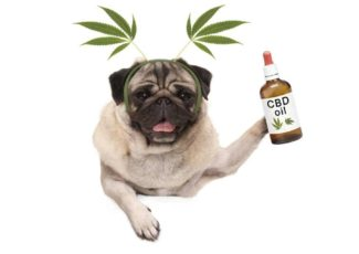 Can you give CBD Oil to pets? Is it safe? We explain. – 11Alive.com WXIA