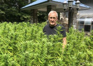 A hemp pioneer: Hendley was first licensed grower in McDowell – McDowell News