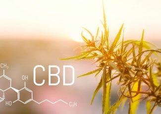 CBD As Medicine — How Much Do We Know So Far? – The Fresh Toast
