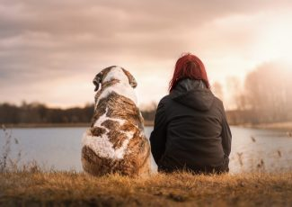 CBD Oil for Pets is Continuously Getting Popular – One World Herald
