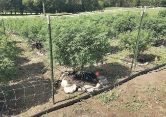 Compost gets high mark from hemp producer – Brattleboro Reformer