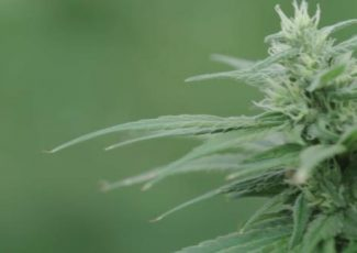 Dr. Sanjay Gupta on medical marijuana: We are in an age of wisdom, but also an age of foolishness – Action News Now