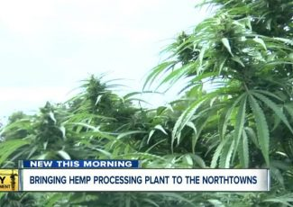 Future hemp production facility in Tonawanda clears hurdle – WKBW-TV
