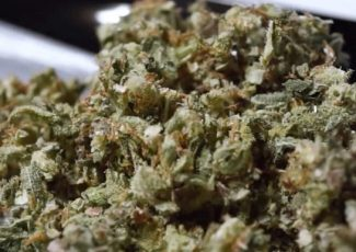 University of Colorado study suggests Cannabis aids in surviving heart… – Communities Digital News
