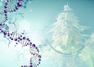 What Are The Benefits Of Medical Marijuana? – Greencamp