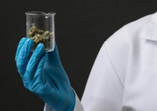 What You and Health Professionals Should Discuss When It Comes To CBD – Yahoo Finance