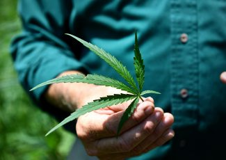 For Texas growers, hemp might not live up to hype – Sherman Denison Herald Democrat