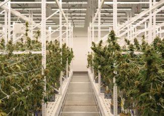 Using medical cannabis to address addiction disorders – Health Europa