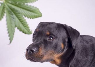 13 CBD pet product companies warned by FDA – PetfoodIndustry.com