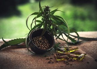 Is Charlotte's Web in Trouble After Recent CBD Warning by FDA? – Cannabis Herald