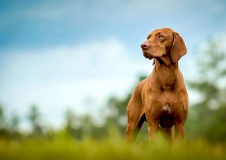 Dogs of the Dow 2020: 10 Dividend Stocks to Watch – Yahoo Finance