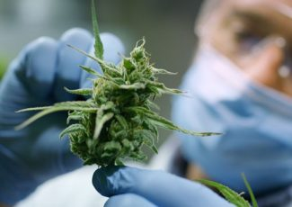 Exploring the Medicinal Benefits of Cannabis Within UK Pharmaceuticals – Technology Networks