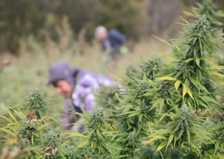 Michigan hemp expo illustrates growing interest in new crop – MLive.com
