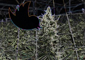 The Most Popular, Viral Weed Tweets Of The Last Decade – Forbes