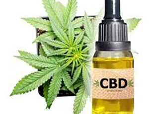 Top 10 reasons users love CBD Oil – mtltimes.ca